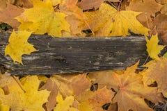 Priorità bassa di autunno con i fogli colorati sulla scheda di legno Immagine Stock Libera da Diritti