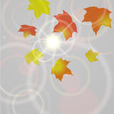 Priorità bassa di autunno con i fogli di volo Fotografia Stock