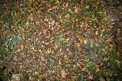 Priorità bassa di autunno con i fogli variopinti fotografia stock