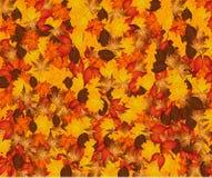 Priorità bassa di autunno con i fogli variopinti Fotografie Stock Libere da Diritti