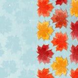Priorità bassa di autunno con le foglie di acero Immagine Stock