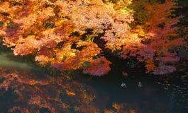 Priorità bassa di autunno con le foglie di acero Immagini Stock