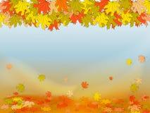 Priorità bassa di autunno con le foglie di acero variopinte Immagine Stock