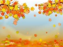 Priorità bassa di autunno con le foglie di acero variopinte Fotografia Stock Libera da Diritti