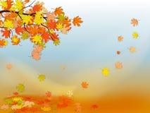 Priorità bassa di autunno con le foglie di acero variopinte Immagini Stock Libere da Diritti