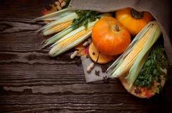 Priorità bassa di autunno con le zucche Fotografie Stock