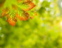 Priorità bassa di autunno di caduta Immagine Stock