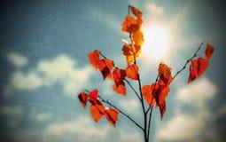 Priorità bassa di autunno di Grunge Fotografia Stock