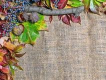 Priorità bassa di autunno di Grunge con i fogli secchi Fotografia Stock