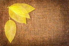 Priorità bassa di autunno di Grunge con i fogli su tela di canapa Fotografia Stock Libera da Diritti