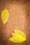 Priorità bassa di autunno di Grunge con i fogli su tela di canapa Immagini Stock Libere da Diritti