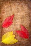 Priorità bassa di autunno di Grunge con i fogli su tela di canapa Fotografie Stock Libere da Diritti