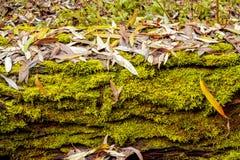 Priorità bassa di autunno di Grunge con muschio verde Immagini Stock Libere da Diritti