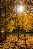 Priorità bassa di autunno fogliame variopinto negli alberi che inguantano al sole fotografie stock libere da diritti