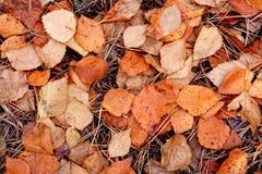 Priorità bassa di autunno in foresta fotografia stock