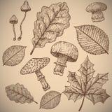 Priorità bassa di autunno oggetti Immagine Stock