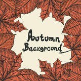 Priorità bassa di autunno oggetti Immagini Stock