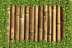Priorità bassa di bambù con il bordo della pianta verde Fotografie Stock