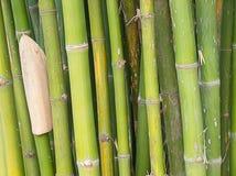 Priorità bassa di bambù della foresta Immagini Stock