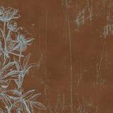 Priorità bassa di carta botanica di Florals dell'annata Fotografia Stock