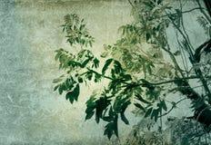 Priorità bassa di carta del fiore e vecchia di struttura fotografie stock libere da diritti