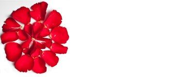 Priorità bassa di carta delle rose rosse Fotografia Stock Libera da Diritti