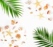 Priorità bassa di corsa il modello delle conchiglie, delle stelle e della palma si ramifica Immagini Stock