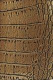 Priorità bassa di cuoio dorata del coccodrillo Fotografie Stock