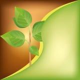 Priorità bassa di Eco con la pianta verde fresca Fotografia Stock Libera da Diritti