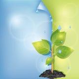 Priorità bassa di Eco con le gocce dell'acqua e della pianta Fotografie Stock