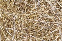 Priorità bassa di erba asciutta Immagine Stock