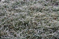 Priorità bassa di erba gelida Immagine Stock Libera da Diritti