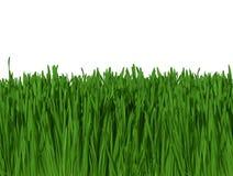 Priorità bassa di erba verde contro cielo blu (fuoco a macroistruzione) 300dpi Fotografia Stock Libera da Diritti