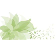 Priorità bassa di estate con il fiore verde Fotografia Stock Libera da Diritti