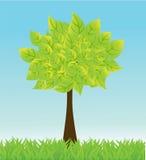 Priorità bassa di estate di vettore con l'albero e l'erba. Immagini Stock