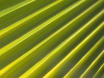 Priorità bassa di foglia di palma astratta Immagine Stock Libera da Diritti