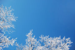 Priorità bassa di gelo di inverno Fotografia Stock