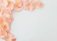 Priorità bassa di giorno del biglietto di S Fondo bianco con delicatamente la rosa di rosa Fotografia Stock Libera da Diritti