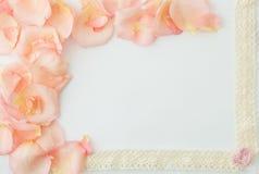 Priorità bassa di giorno del biglietto di S Fondo bianco con delicatamente la rosa di rosa Immagine Stock