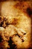 Priorità bassa di Grunge con i fiori Fotografia Stock