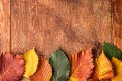 Priorità bassa di Grunge con i fogli di autunno Immagini Stock Libere da Diritti