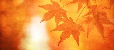 Priorità bassa di Grunge con i fogli di autunno Fotografia Stock
