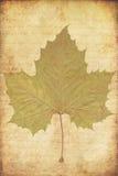 Priorità bassa di Grunge con i fogli di autunno Fotografie Stock