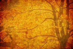 Priorità bassa di Grunge con i fogli di autunno Fotografia Stock Libera da Diritti