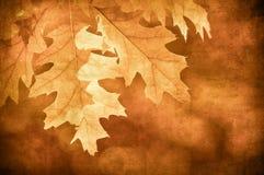 Priorità bassa di Grunge con i fogli di autunno Immagini Stock