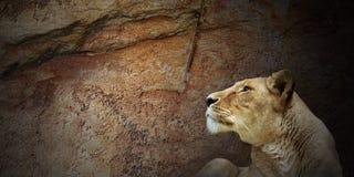 Priorità bassa di Grunge con il leone Fotografia Stock