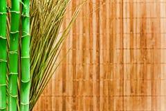 Priorità bassa di Grunge dell'erba e del bambù Fotografie Stock