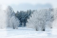 Priorità bassa di inverno Priorità bassa anno di nuovo o di natale Inverno anteriore Fotografia Stock
