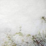 Priorità bassa di inverno con l'abete della neve illustrazione di stock