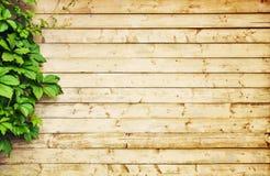 Priorità bassa di legno chiara Fotografia Stock Libera da Diritti